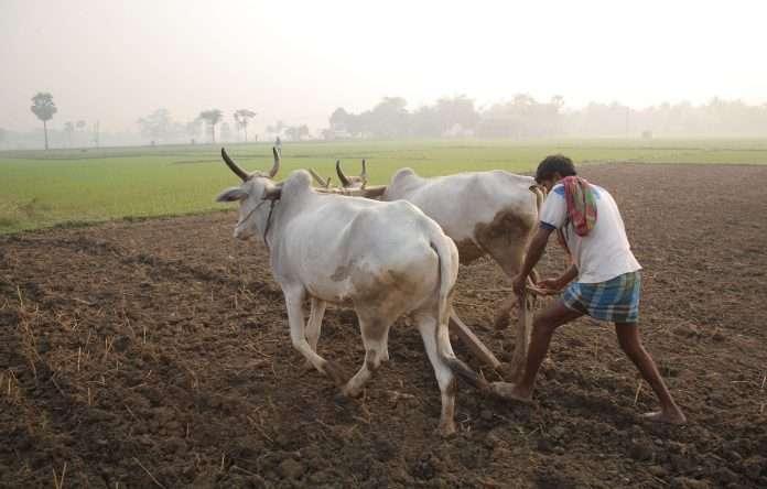 Farmer of india