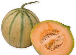 premium melons