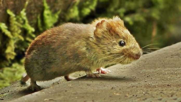 BMC has rat killers working through the night