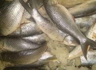 REVER FISH PICS SANDEEP Takke