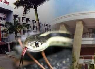 Snake at Vidhan Bhavan Nagpur