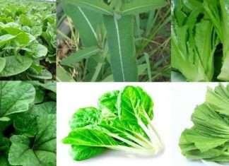 rainy green vegitable