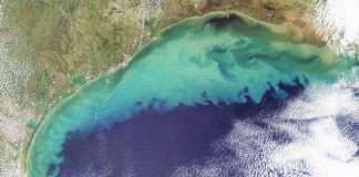 dead zone in arabian sea