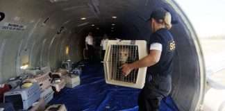 small puppy forces emergency landing