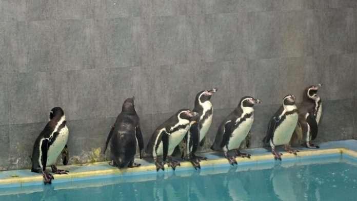 penguin mumbai