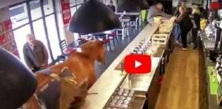 Trending video: When horse walks into a bar