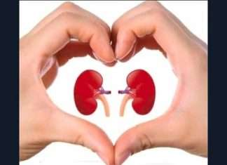 mother in law donated her kidney to her daughter in law in rajasthan