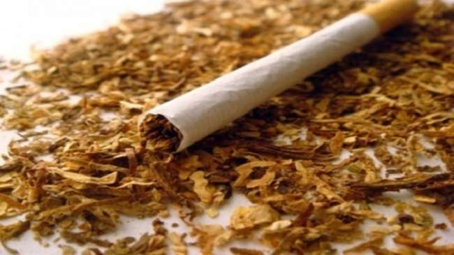 72 people thousand deaths annually in Maharashtra due to tobacco consumption