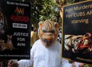 avni tigress protest