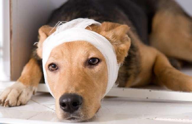 4 men brutally raped a dog in Mumbai