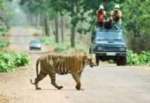 Forest department ban mobile at tadoba national park