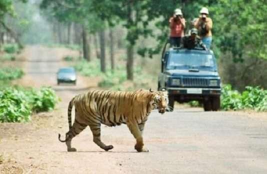 Forest department ban mobile at tadoba national park