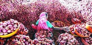 onion prices continune fall in feb month