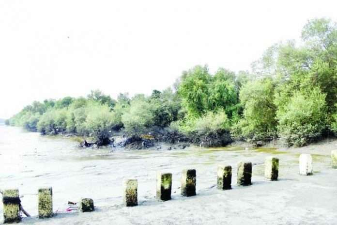 new application will find Thieves in the mangrove forest