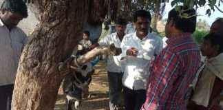 beed Animal death case