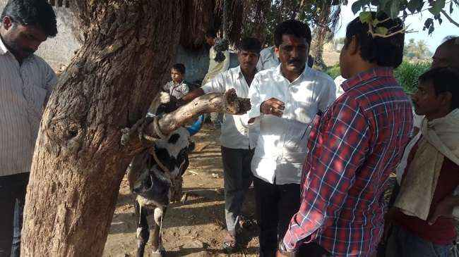 beed Animal death case
