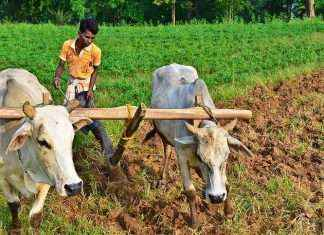 Farmer in Nasik