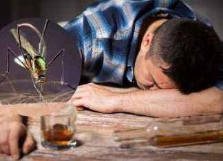 why mosquito bite more to drunkyard