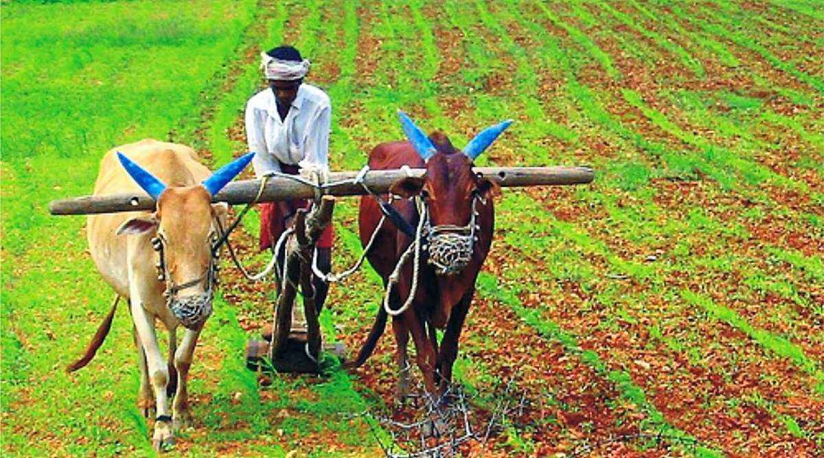 Indian Farmers