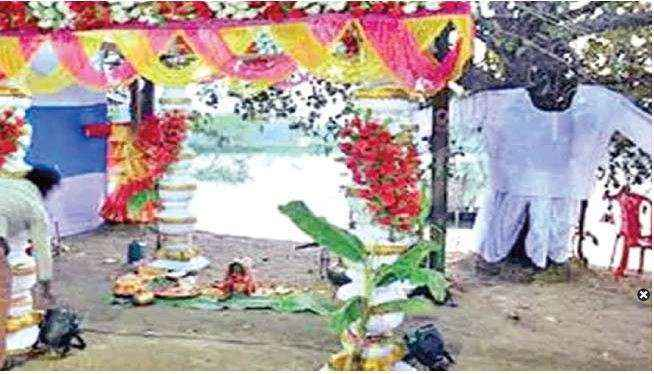 Two trees gets married in West Bengal