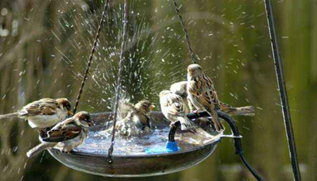 water for birds