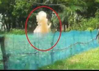 west bengal violence in malda crude bomb lok sabha elections