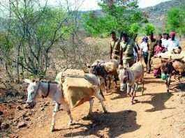 tamil nadu polling donkeys