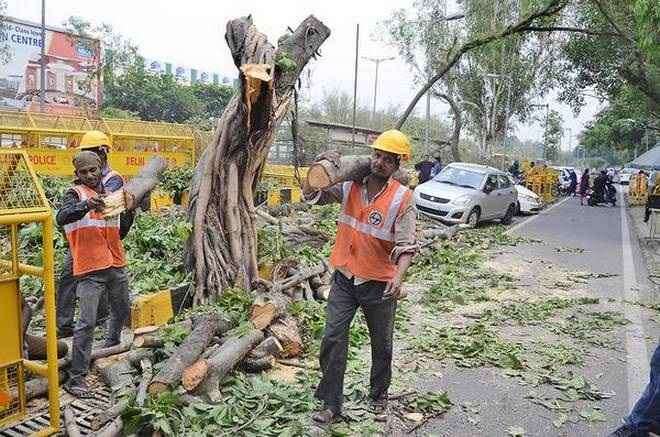 mumbai high court rejects all four pils against cutting of trees at aarey for mumbai metro car shed