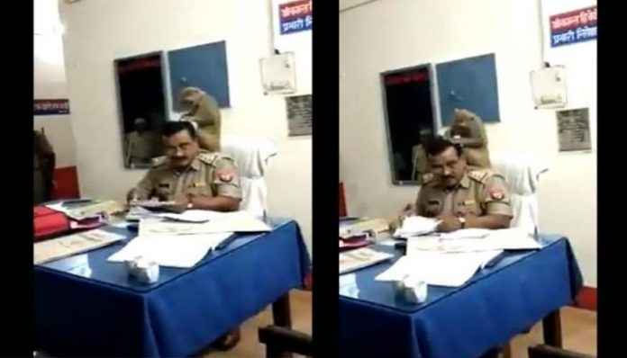 monkey sits on up cop shoulder looks for lice in his hair viral video leaves internet in splits