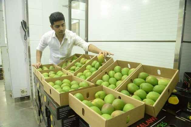 दररोज या आब्यांच्या ५०० पेट्या मुंबईच्या बाजारात दाखल होणार