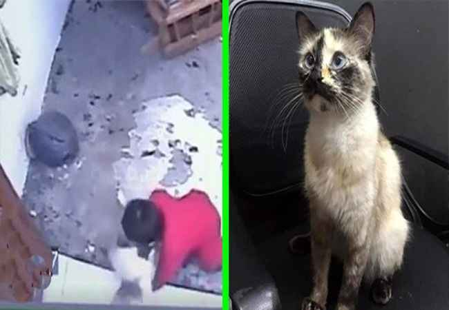 colombia viral video cat saves 1 year old baby from falling down the stairs