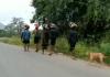 karnataka stray dog following a group of 13 devotees walked 480 km