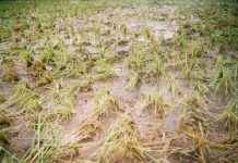 nashik unseasonal rain farmer affected