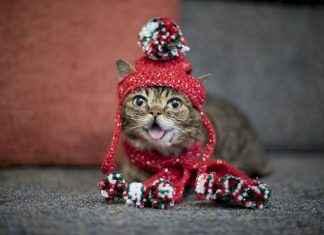 इंस्टाग्रामवरील २४ लाख फॉलॉअर्स असलेल्या मांजरीचा मृत्यू