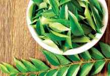 Home Remedies of Curry Leaf