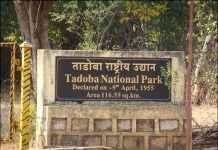 Tadoba