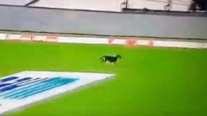 IND vs WI: play halted after dog runs inside ground
