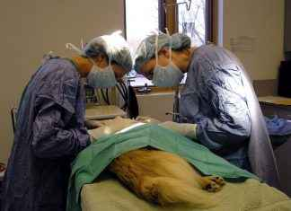 municipal super specialty hospital for animals in mumbai soon