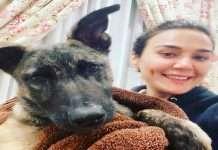preity zinta dog saves her life from drowing actress tweet viral on social media
