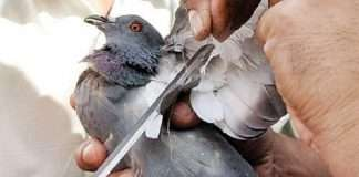 632 birds were injured on the day of Makar Sankranti in the state