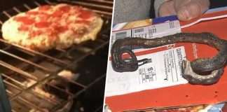 viral video north carolina family finds snake in oven while baking pizza