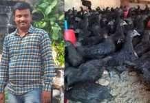 pramod jamdade suicide kadaknath scam