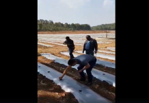 ms dhoni farming watermelon and papaya shared video on facebook might be his retirement plan