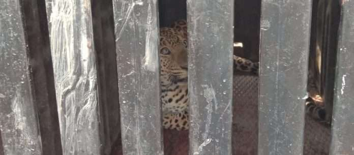 Dog saves his life from leopard