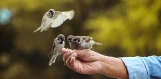 feeding-birds-man-108954065