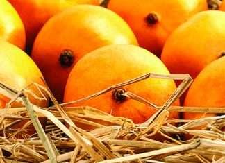 devgad mangoes price incres