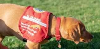 britain sniffer dogs detect coronavirus