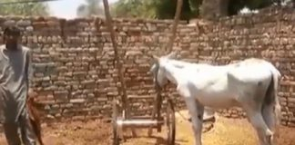 Donkey released after Pakistan police swoop on gambling race