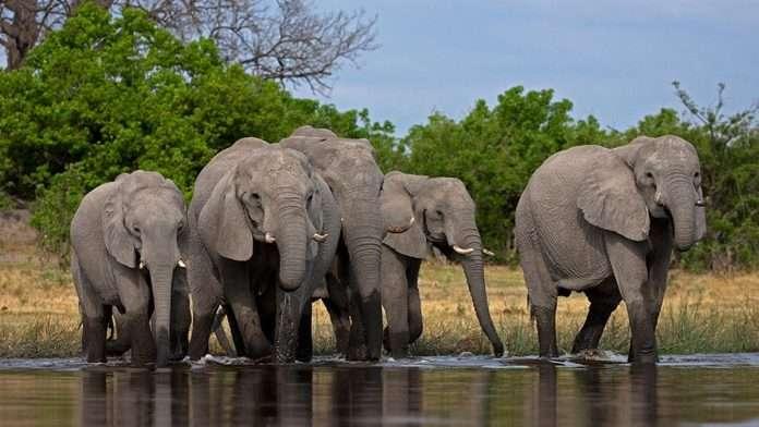 elephants in konkan