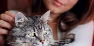 bizarre man blames cat for getting wife pregnant